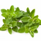 Sweet Marjoram (Majorana Hortensis) 2000 seeds * herbs* *SHIPPING FROM US* CombSH I24