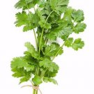 Cilantro/Coriander Slow bolt 250 seeds ( Coriandrum sativum ) * herb *SHIPPING FROM US* CombSH H24