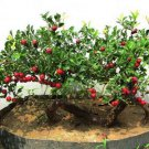 Chinese hawthorn 10 seeds Crataegus pinnatifida tree Edible Hardy *SHIPPING FROM US* CombSH M52