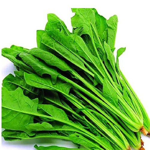 Spinach ,Bloomsdale Long standing 500 + seeds finest spinach variety H16