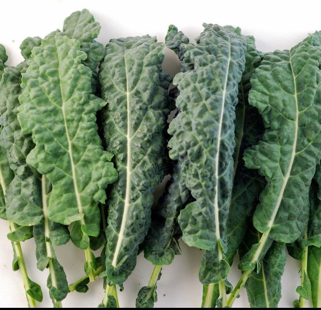 Kale forage premier 500 seeds * Non GMO * ez grow * *SHIPPING FROM US* CombSH F13
