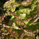 Lettuce Bronze Mignonette Lactuca sativa 3000 seeds * NON GMO * ez grow * *SHIPPING FROM US* CombSH