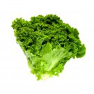 Green leaf Lettuce Lactuca sativa 3000 seeds * NON GMO * ez grow * *SHIPPING FROM US* CombSH G44