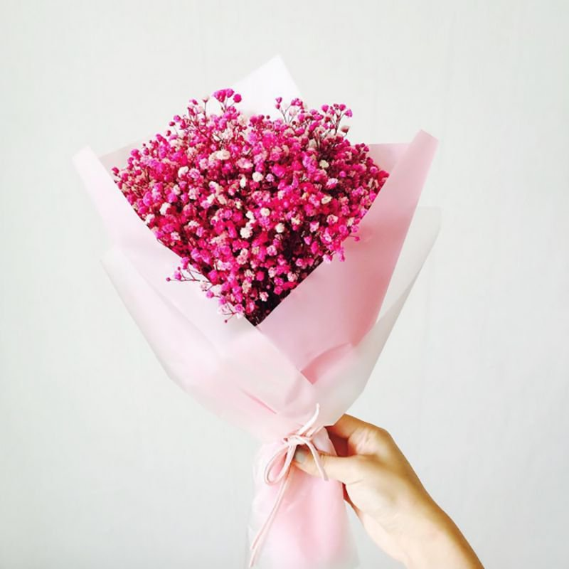 Red Baby's breath 500 seeds Gypsophila elegan *Cut flower * *SHIPPING FROM US* CombSH A85
