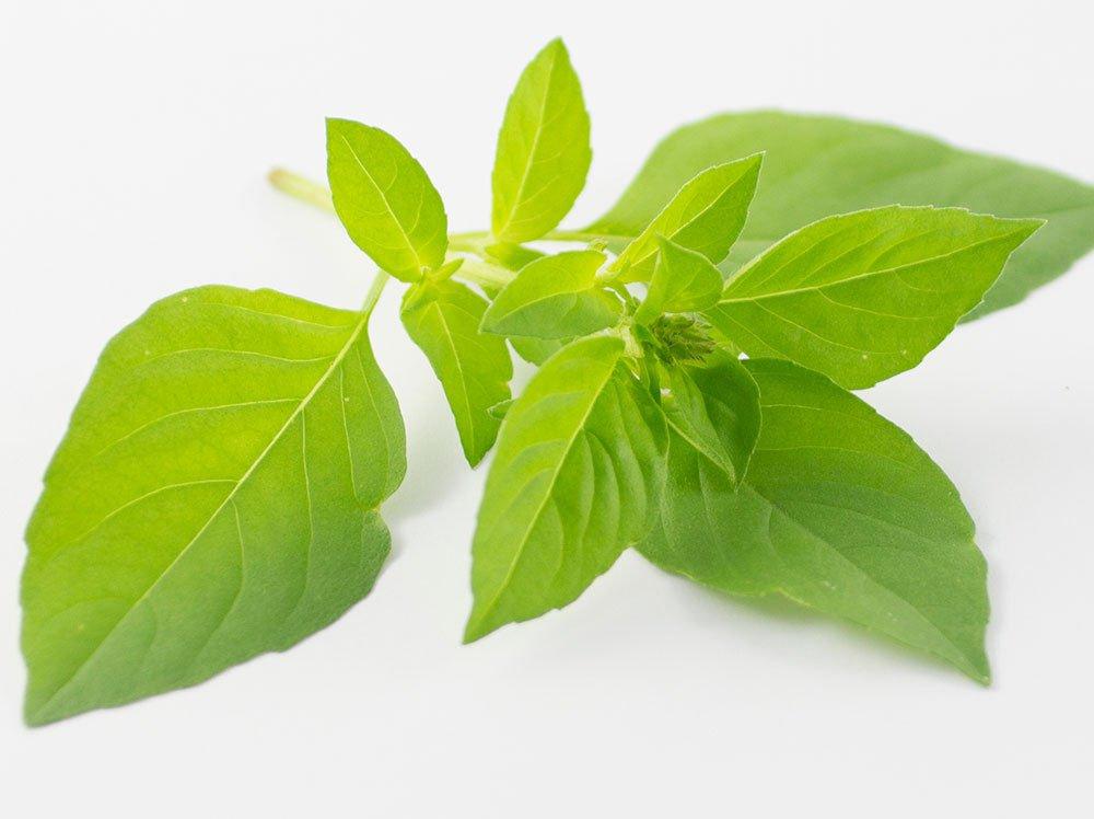 Lemon Basil 500 seeds * Culinary herbs and spices * EZ grow * E82