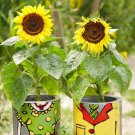 Sunflower Dwarf Sunspot 25 seeds * Fit in pot * Non GMO * *SHIPPING FROM US* CombSH J41