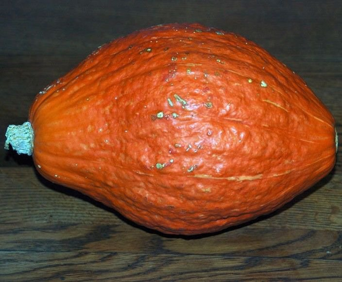 Golden Hubbard Squash 20 seeds * Heirloom * Non GMO * *SHIPPING FROM US* CombSH F25