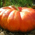 Cinderella pumpkin 10 seeds *Rouge Vif d'Etampes* Heirloom *Non GMO* *SHIPPING FROM US* CombSH G16