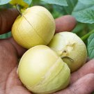 Pineapple tomatillo 100 seeds Physalis ixocarpa * Salsa * Salad * *SHIPPING FROM US* CombSH B77