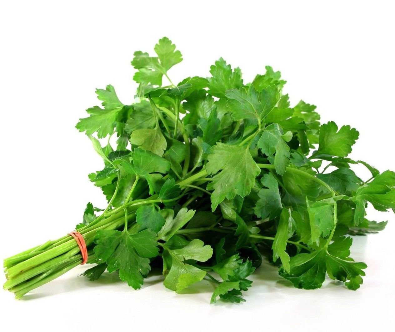 Plain Parsley Petroselinum crispum 1000 seeds * herb * spice * *SHIPPING FROM US* CombSH G34