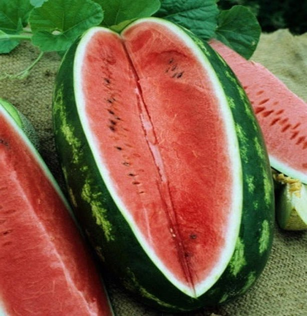 Watermelon Congo 50 seeds * Non GMO * Huge * Extra sweet * *SHIPPING FROM US* CombSH K34