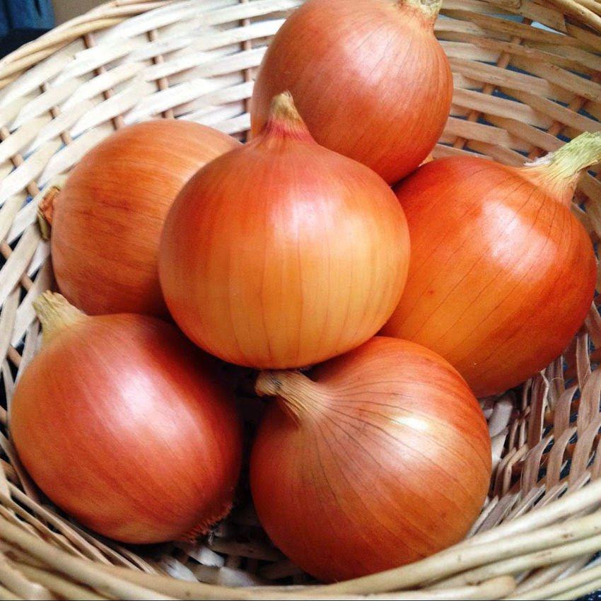 ( Short day ) Texas Early Grano onion 250 seeds * NON GMO * ez grow **SHIPPING FROM US* CombSH I53