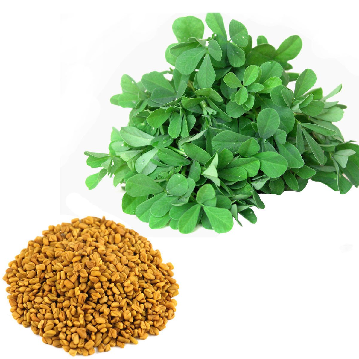 Fenugreek Trigonella foenum-graecum 300+ seeds * Spice * Herb * *SHIPPING FROM US* CombSH B76