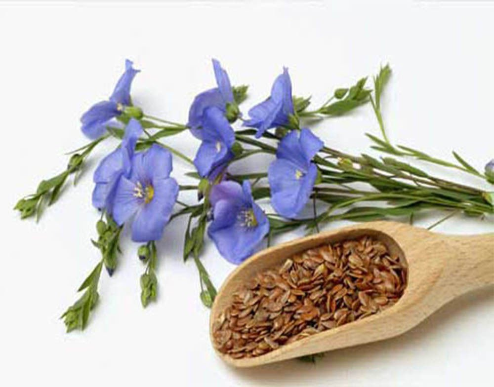 100 Common Flax seeds Linum usitatissimum  herb * ez grow *  *SHIPPING FROM US* CombSH M42