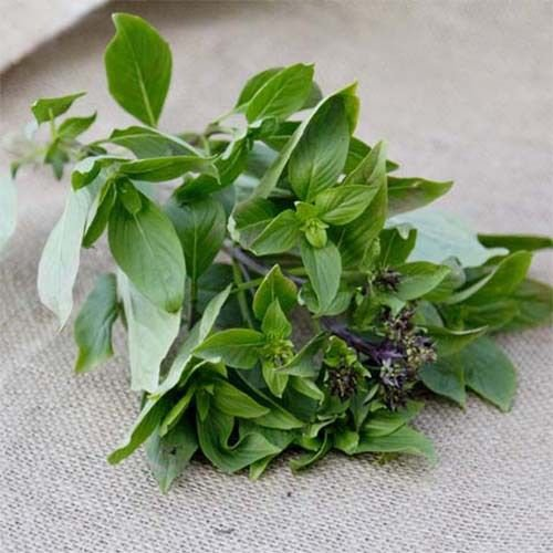 Siam Queen Basil 300 seeds  * Grow your own herb * ez grow * *SHIPPING FROM US* CombSH D31