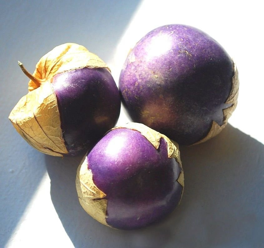 Purple tomatillo 100 seeds Physalis ixocarpa * Salsa * Salad * I15