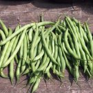 Bush bean Kentucky Wonder 50 seeds * Heirloom * Non GMO * *SHIPPING FROM US* CombSH J35