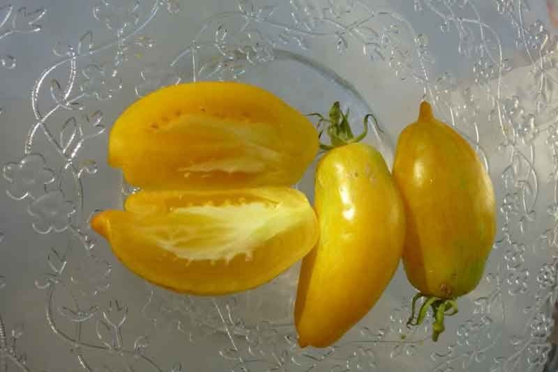 50 Banana Legs Tomato seeds heirloom vegetable Non GMO * ez grow * *SHIPPING FROM US* CombSH L23