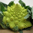 Romanesco broccoli 100 seeds  Unusual form Broccoli * Edible * Ornamental *SHIPPING FROM US* CombSH