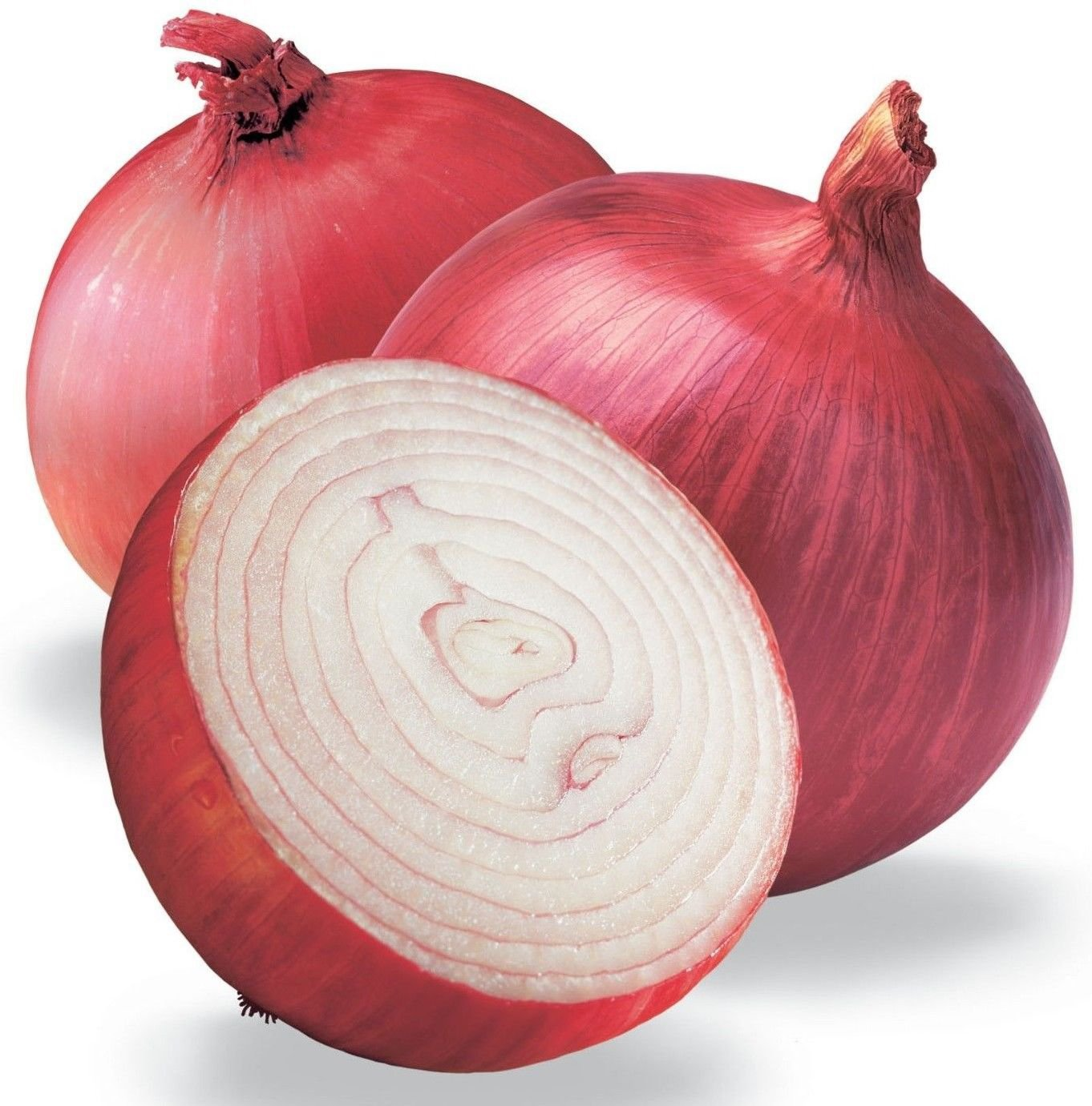 ( Long day ) Ruby red onion 250 seeds * NON GMO * ez grow * E66