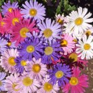 Aster Single mix 100 seeds * Cut flower * Gorgeous * *SHIPPING FROM US* CombSH I35