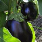 Black Beauty Eggplant 125 seeds * NON GMO * ez grow * E81