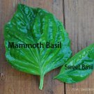 Mammoth basil (Ocimum basilicum) 100+ seeds Medicinal, Tea , herb ez grow *SHIPPING FROM US* CombSH