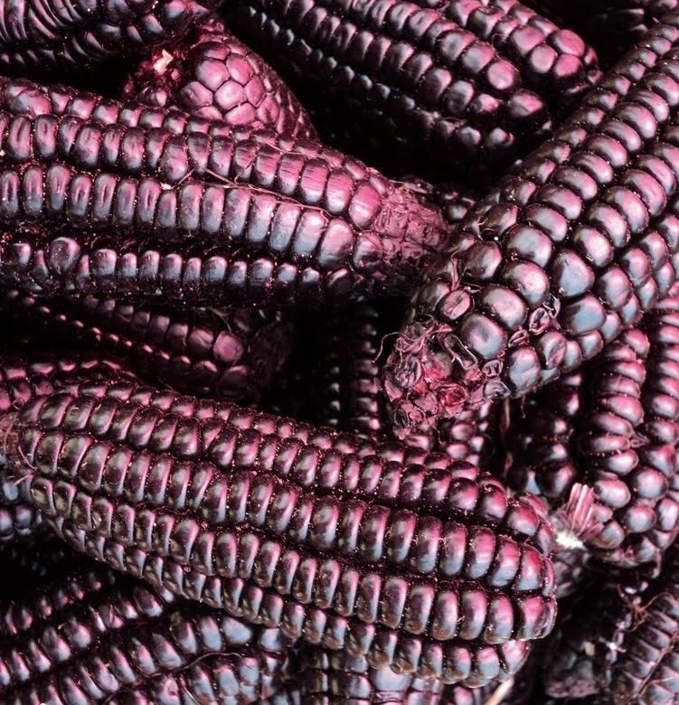 Purple Popcorn 50 seeds * Grow you own popcorn * Ornamental *SHIPPING FROM US* CombSH G33