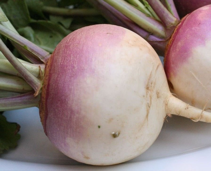 American Purple Top Rutabaga 1000 seeds * Non GMO* EZ grow E84