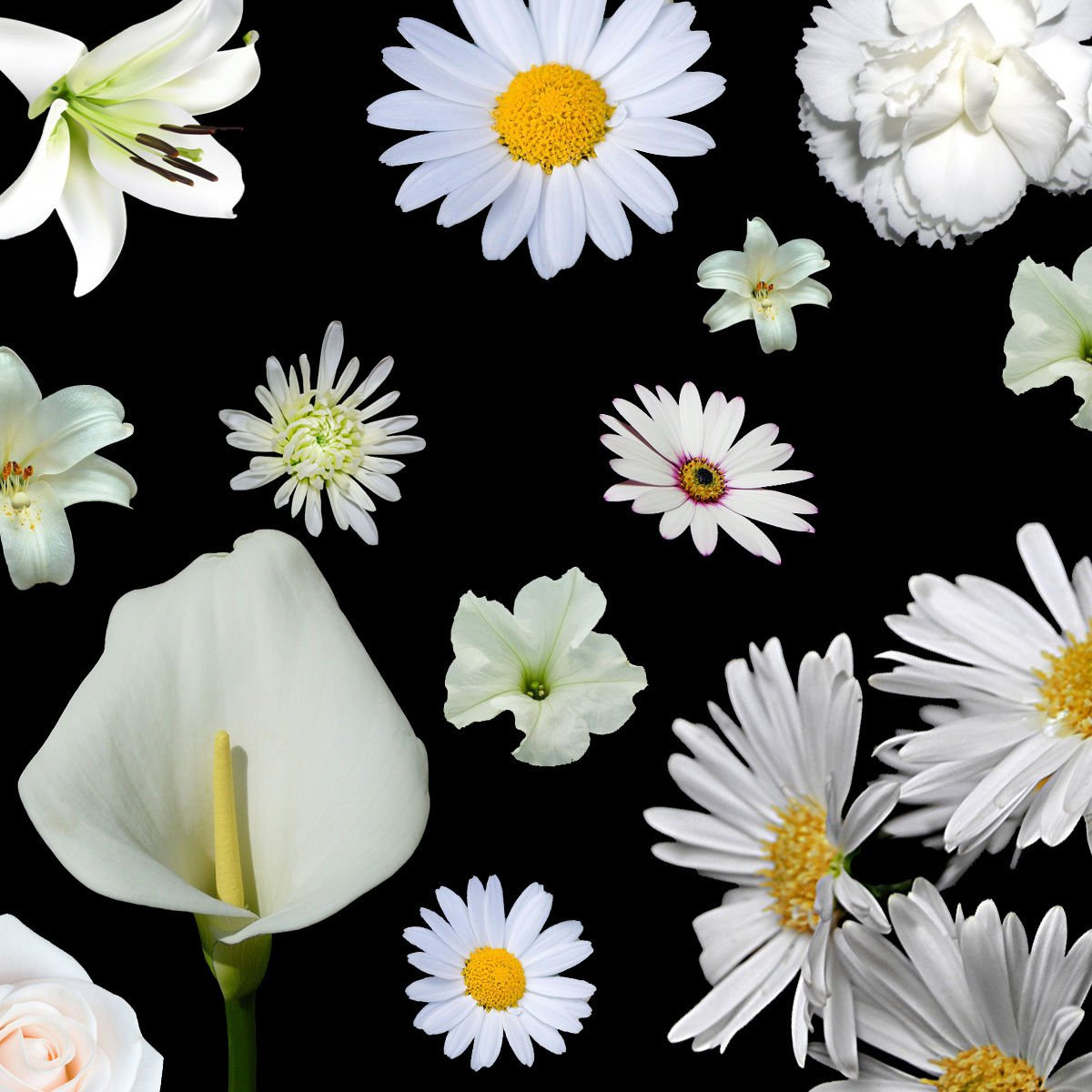 White Color Shades Wild flowers Approximate 100 seeds *easy grow* garden *SHIPPING FROM US* CombSH