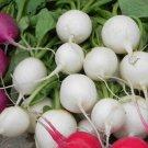 Hailstone radish 500 seeds * NON GMO * ez grow * E87