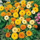 Calendula Fiesta Gitana  100 seeds * Cut flower * herbal tea * *SHIPPING FROM US* CombSH J42