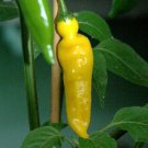 Hungarian Yellow Hot Pepper 50 seeds Heirloom * NON GMO  * *SHIPPING FROM US* CombSH E28