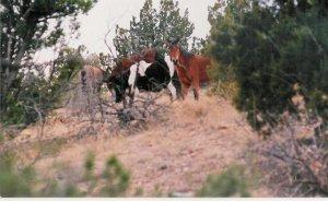 horses 1 10 x 13 framed