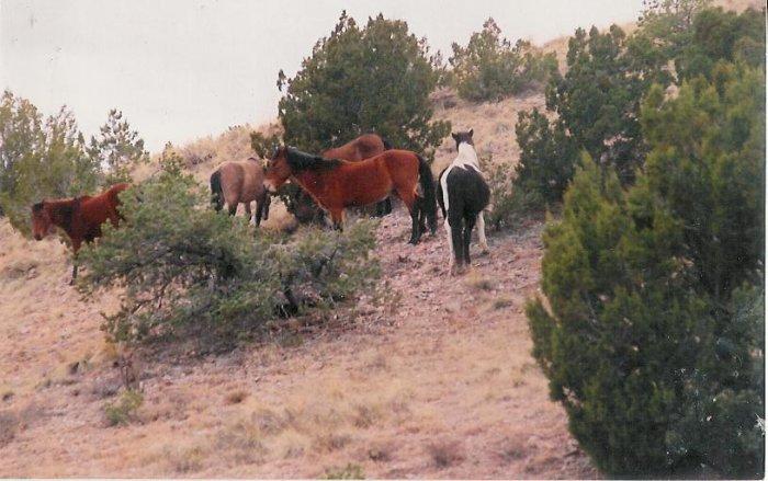 horses 2  8 x 10  framed