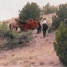 horses 2  unframed