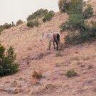 horses 3 10 x 13 framed