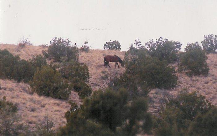 horses 4 10 x 13 framed