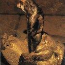 1996 Topps Goosebumps #50 Snake Trading Card