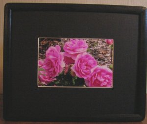 Roses In Black Frame