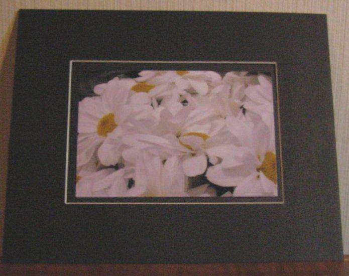 Daisies In Black Frame