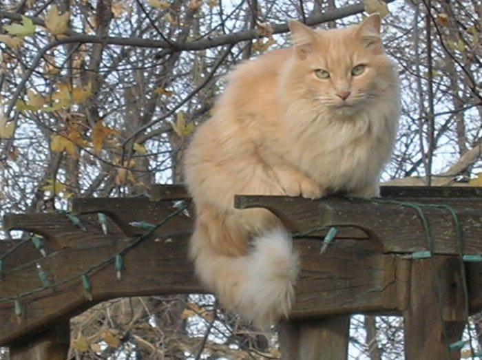 Cute Cat Photo Card
