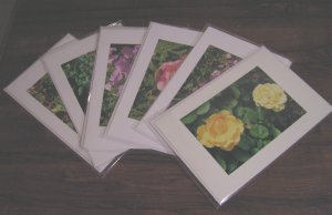 6 Assorted Photo Cards