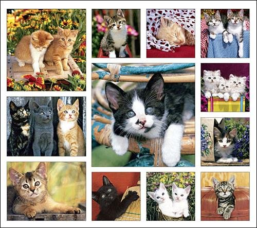 Kitten Caboodle Calendar with Bonus