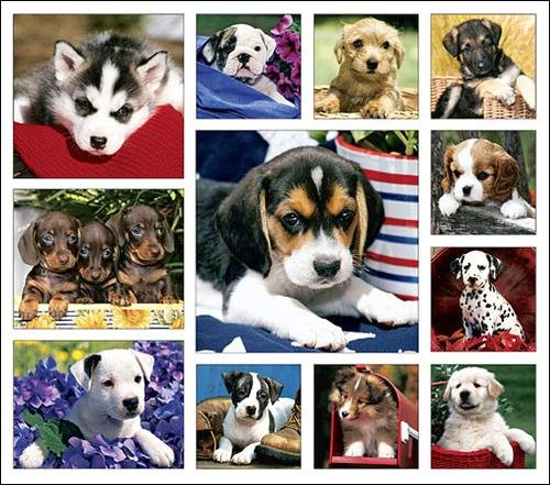 Puppy Love Calendar with Bonus