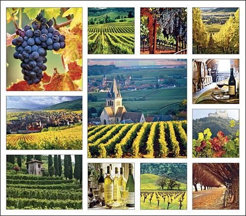 Vineyards Calendar with Bonus