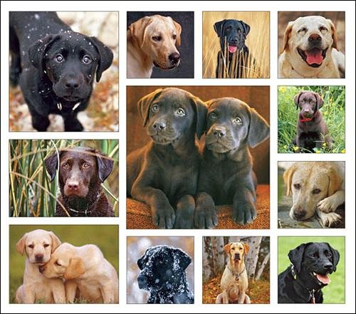 Loveable Labs Calendar with Bonus