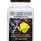 Antibiotics Amoxicillin Fish Mox Forte Amoxicillin 30 Capsules 500mg fish antibiotics