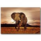 Africa Sunset Elephant Animals Nature Poster 32x24