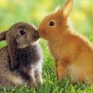 Bunny Rabbits Kissing Poster Photo Print 32x24